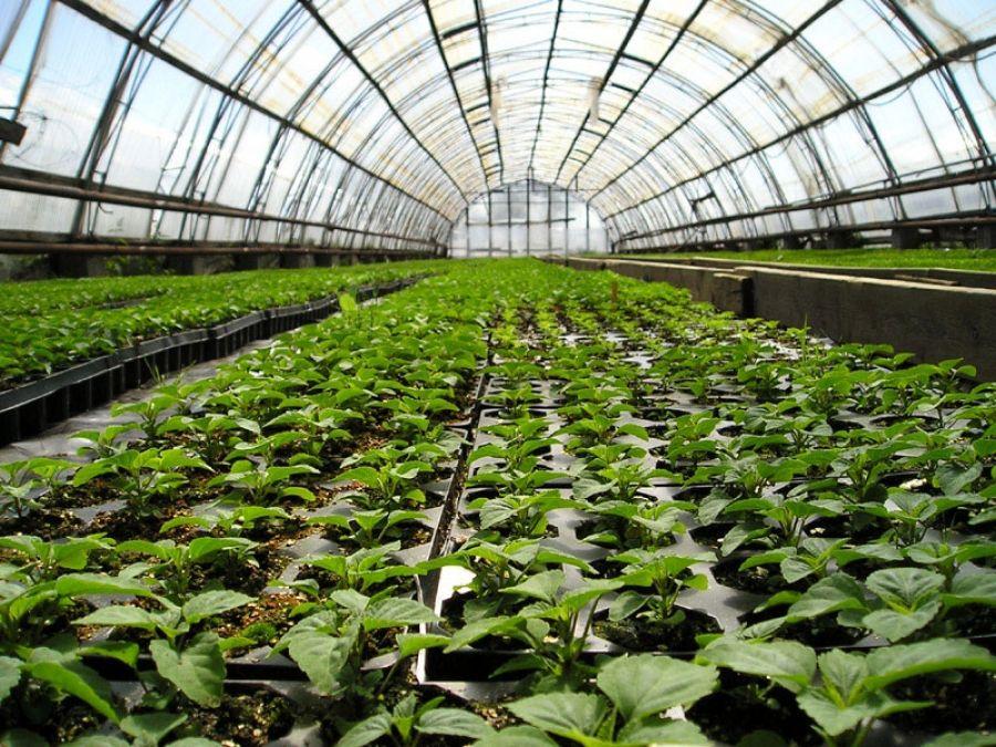 В Кочубеевском районе построят более 60 гектаров новых теплиц