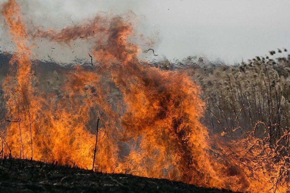 В некоторых районах Ставрополья 14 — 16 июня прогнозируется чрезвычайная пожароопасность