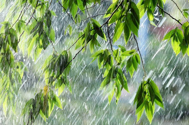 На Ставрополье установится дождливая погода