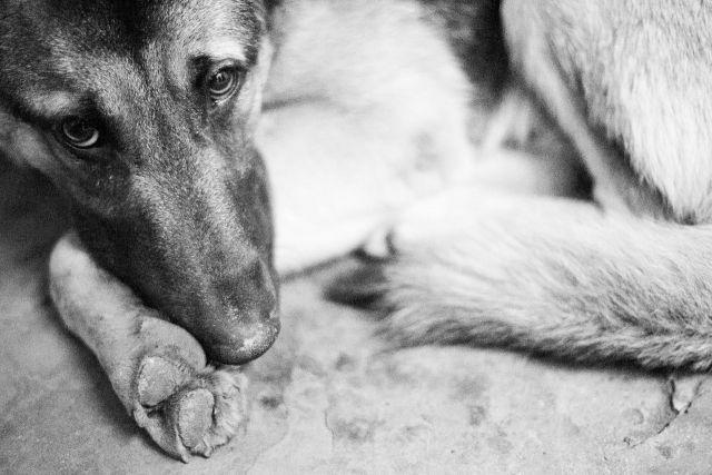 На Ставрополье найдены изувеченные трупы домашних животных