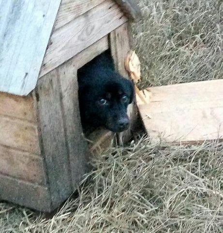 На Ставрополье хозяин вывез за город собаку и заколотил её в будке