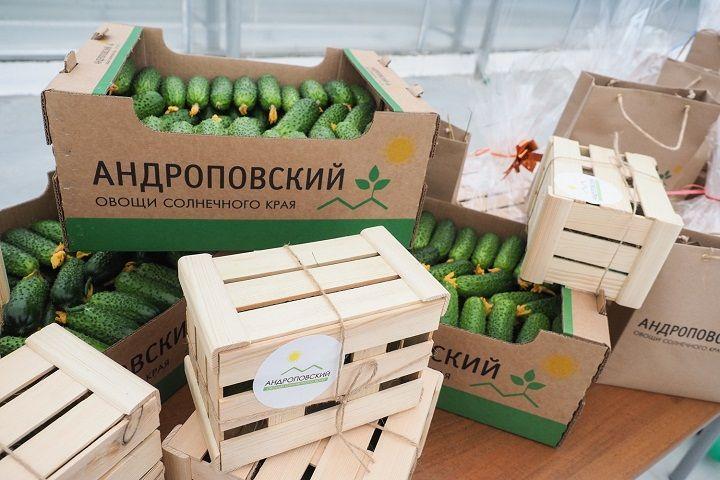 Благодаря открытию нового комплекса Ставрополье выйдет на первое место в стране по выращиванию тепличных овощей