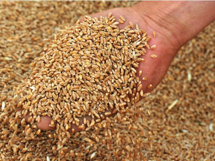 Министр сельского хозяйства России поздравил ставропольцев с окончанием жатвы