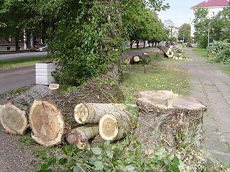 Экологи просят мэра города прекратить вырубку деревьев