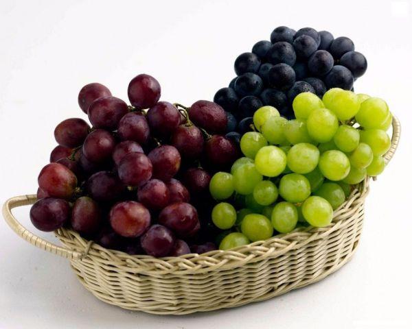 Точка роста экономики Ставрополья — виноградарство