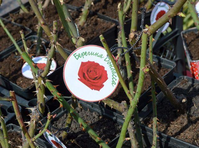 Донецк передал в дар Ставрополю саженцы роз