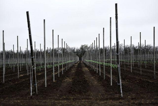 На Ставрополье заложен новый сад суперинтенсивного типа