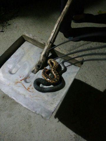 В частный дом под Ставрополем заползла змея