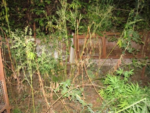 Житель Ставрополья хранил дома более 3,5 килограмма марихуаны