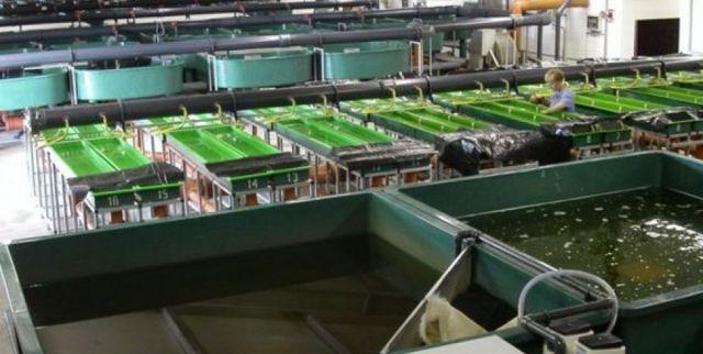 В Ставропольском крае появится завод по производству коллагена из рыбы