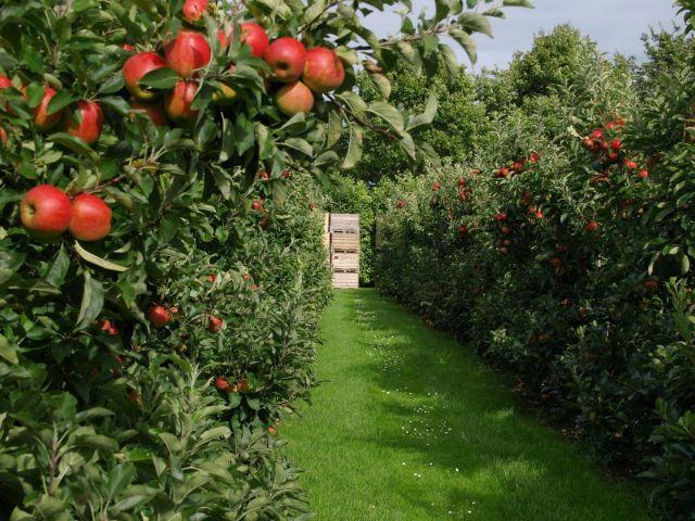 Интенсивный фруктовый сад с оптово-распределительным центром создан в Ставропольском крае