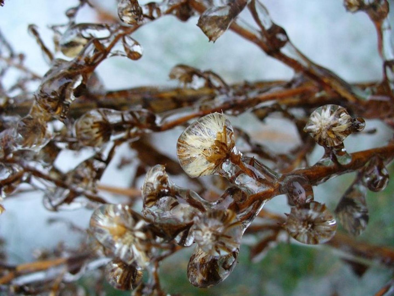 В Ставропольском крае прогнозируются заморозки