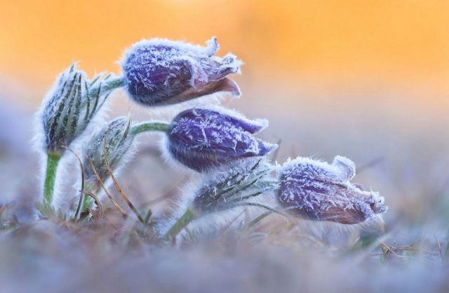 В выходные на Ставрополье ожидаются заморозки, сильный ветер и дождь