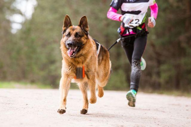 В Ставрополе прошли гонки на собачьих упряжках без снега