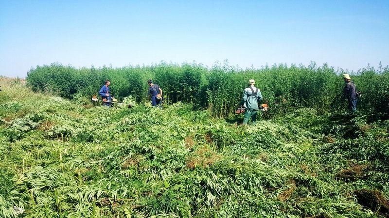 Плантация марихуаны обнаружена в Краматорске, - СБУ - Цензор.НЕТ 4681