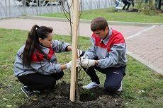 Тысячу деревьев высадили студенты на улице Серова