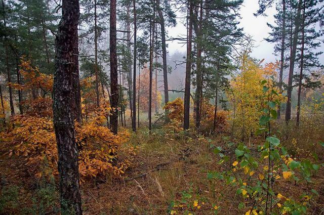 Ставропольская грибница потерялась в лесу КЧР