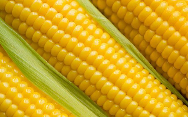 На Ставрополье выявили 10 тысяч тонн токсичной кукурузы