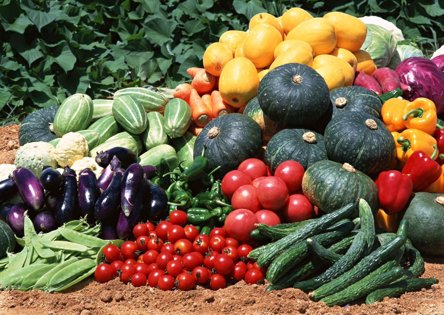 Выращиванием овощей и зерновых культур займутся александровские и ипатовские инвесторы