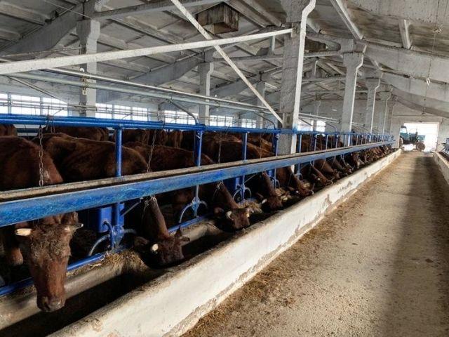 В Ставропольском крае модернизировали молочно-товарную ферму
