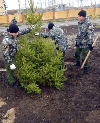 В Ставрополе появилась аллея из европейских елей и крымских сосен