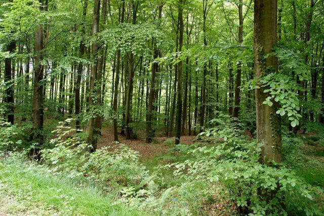 Минприроды Ставрополья: Гуляйте в лесу на здоровье!