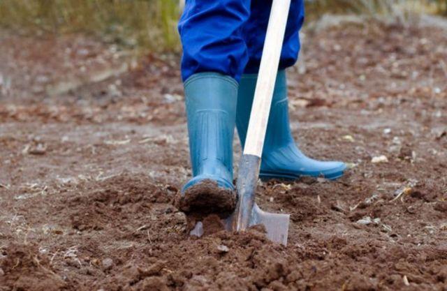 Ставропольчанка обнаружила в своём огороде скелетированные останки младенца