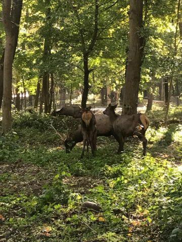 В парке Невинномысска поселились олени