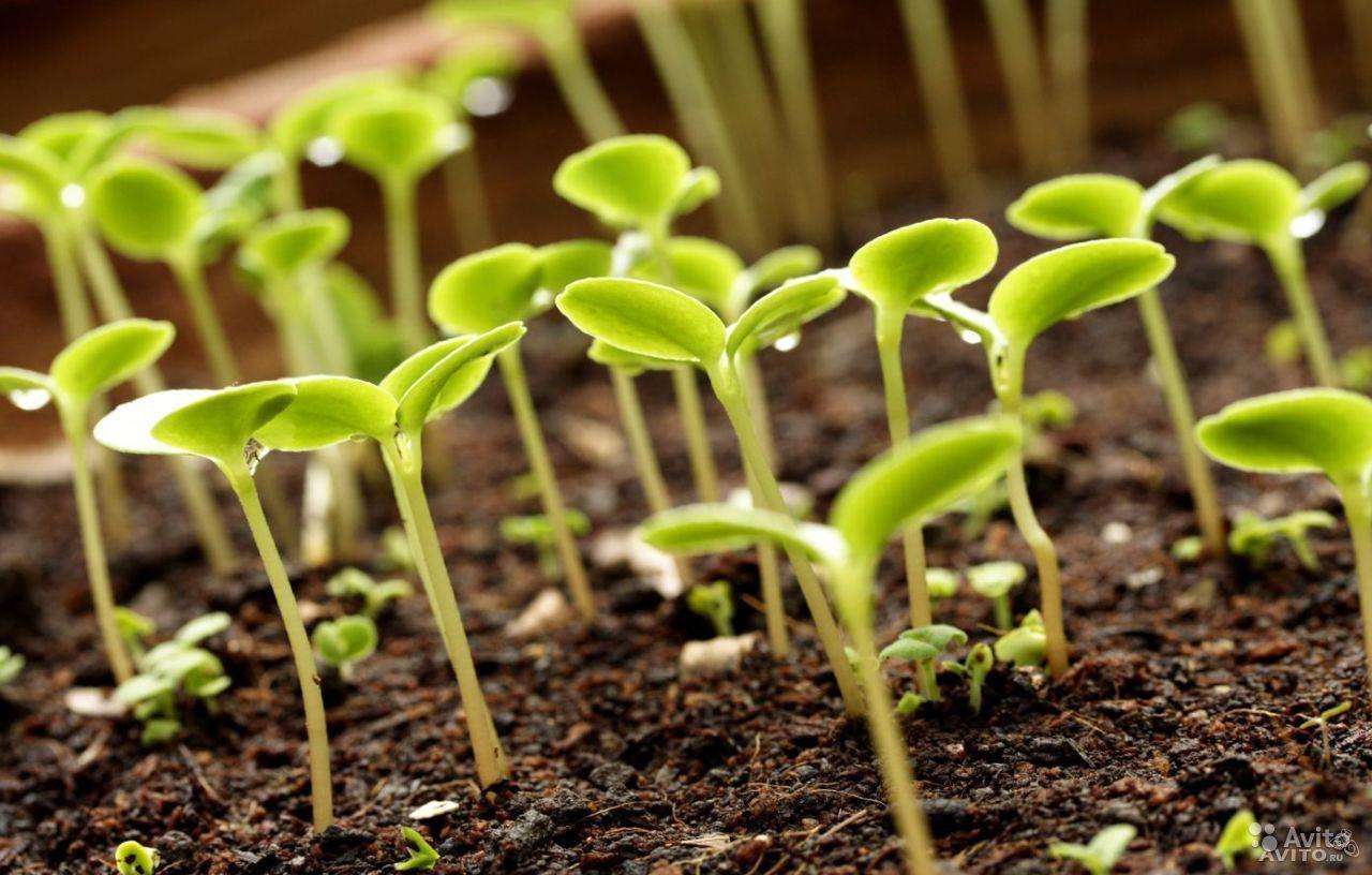 Минсельхоз Ставрополья устанавливает партнёрские отношения со всеми участниками агрорынка