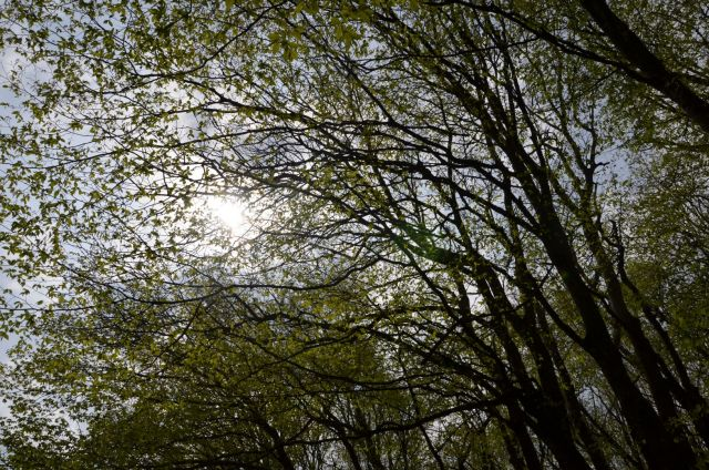 Границы ставропольского природного заказника «Русский лес» увеличены