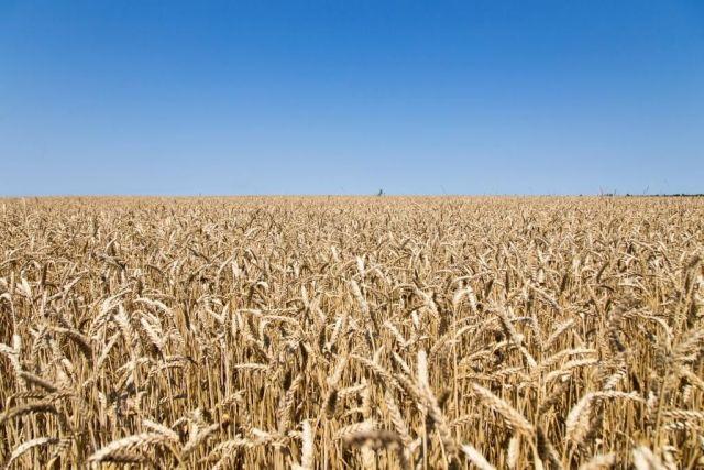 На Ставрополье собрано 8,8 миллиона тонн зерновых