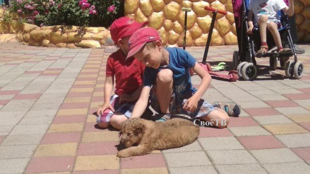 В зоопарке Ставрополя родились оленёнок и львёнок