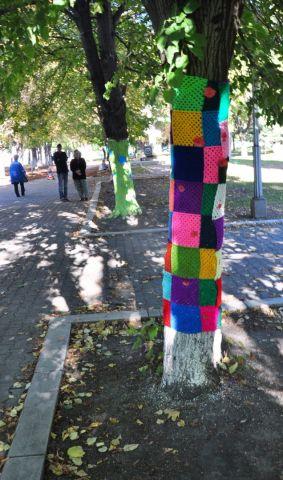 Ставропольские школьники связали одежду для деревьев