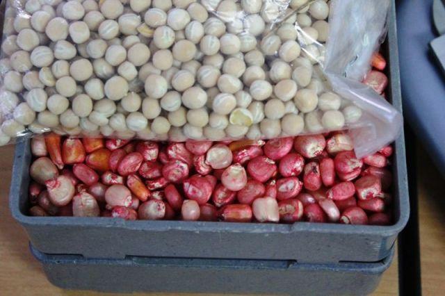 На Ставрополье идёт реализация инвестпроекта по выращиванию семян