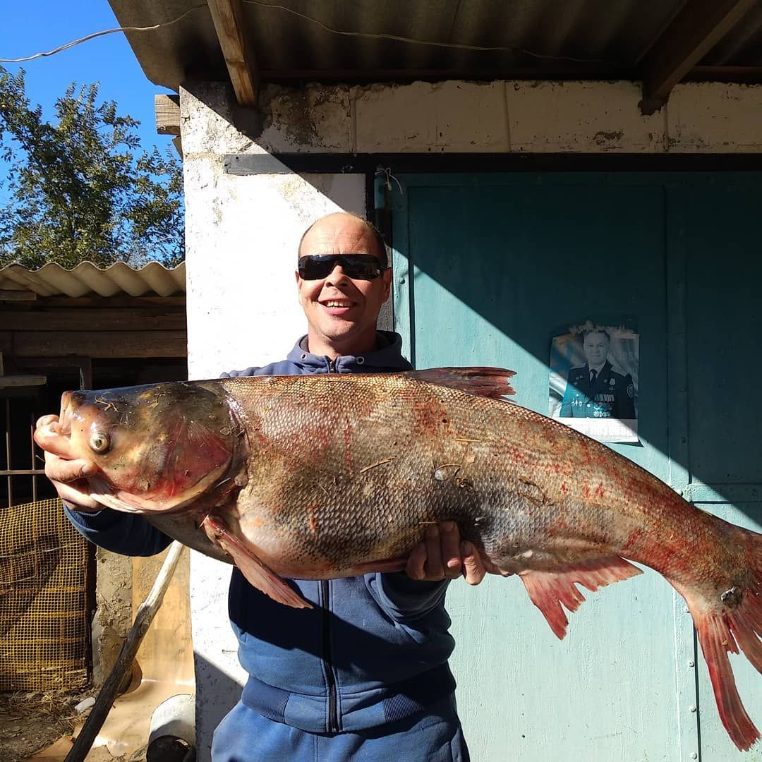Ставрополец поймал в пруду гигантского толстолобика