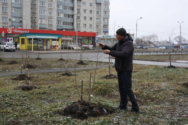 Житель Невинномысска высадил сотню деревьев на улице города