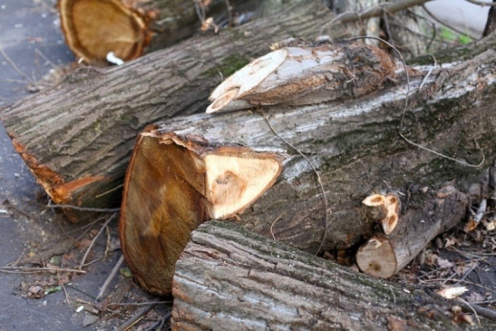 Жителя Кисловодска осудят за преступную вырубку деревьев на10 млн руб.