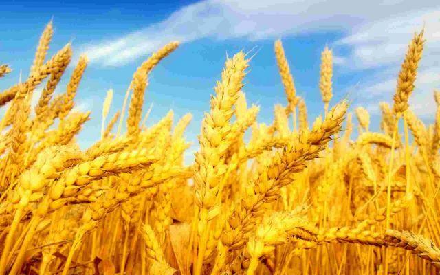 Ставропольские аграрии завершили жатву 2017 года