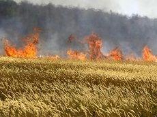 В крае прогнозируются пожары