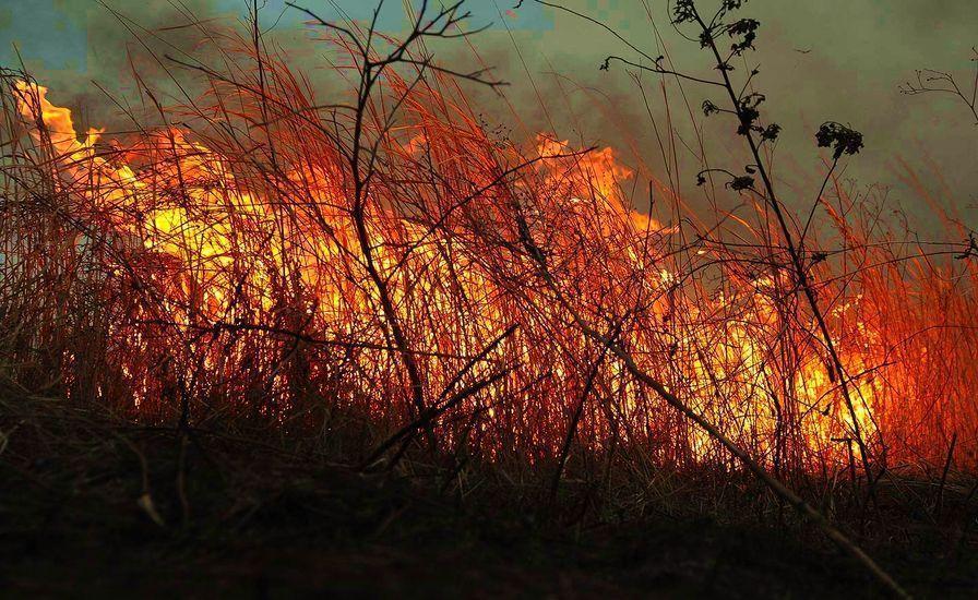 На Ставрополье 11-13 августа сохранится чрезвычайная пожароопасность