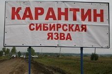 В Солнечнодольске введен режим ЧС после двух случаев заболевания сибирской язвой