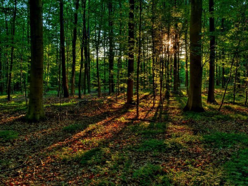 В 2017 году в крае будет создана новая особо охраняемая природная территория