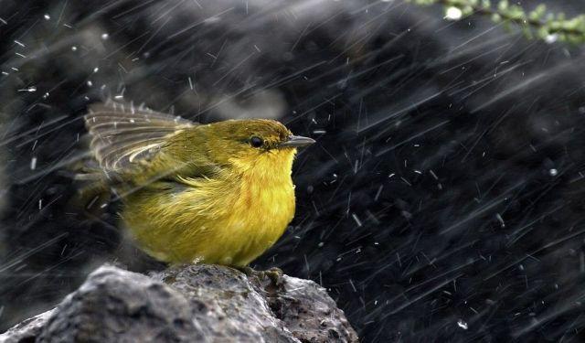 На Ставрополье в ближайшие два дня ожидается дождь со снегом