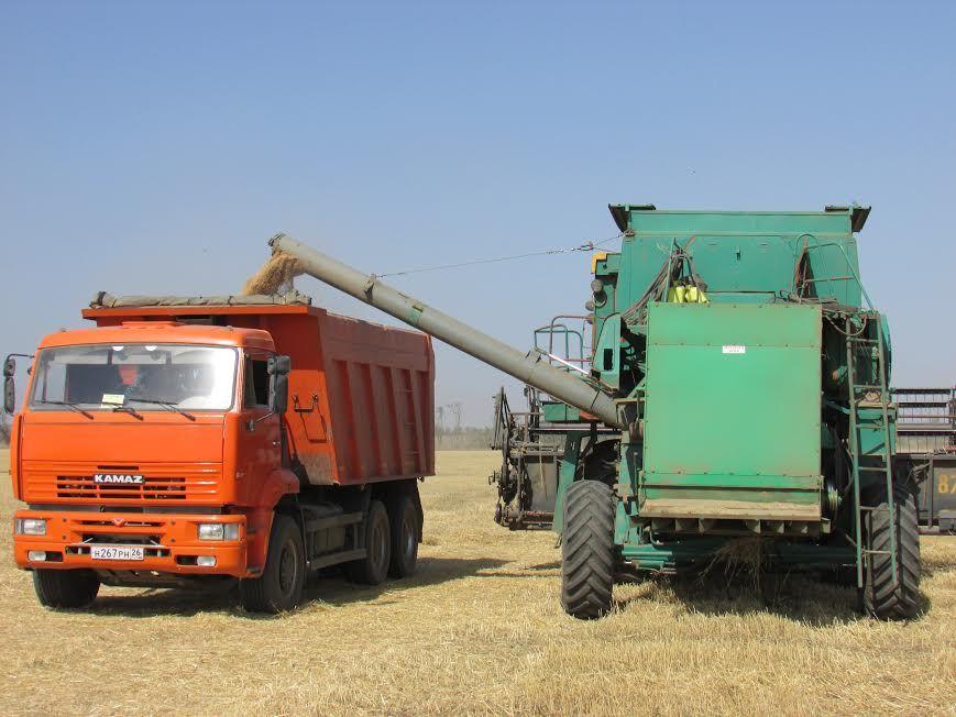 На Ставрополье убрано более половины площадей зерновых культур