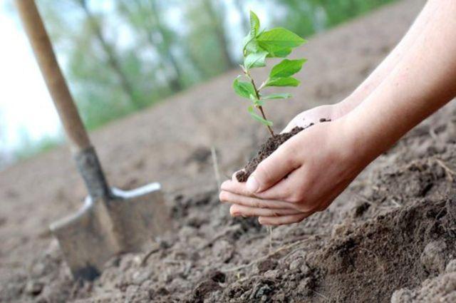 В Ставрополе высадят более 20 тысяч деревьев