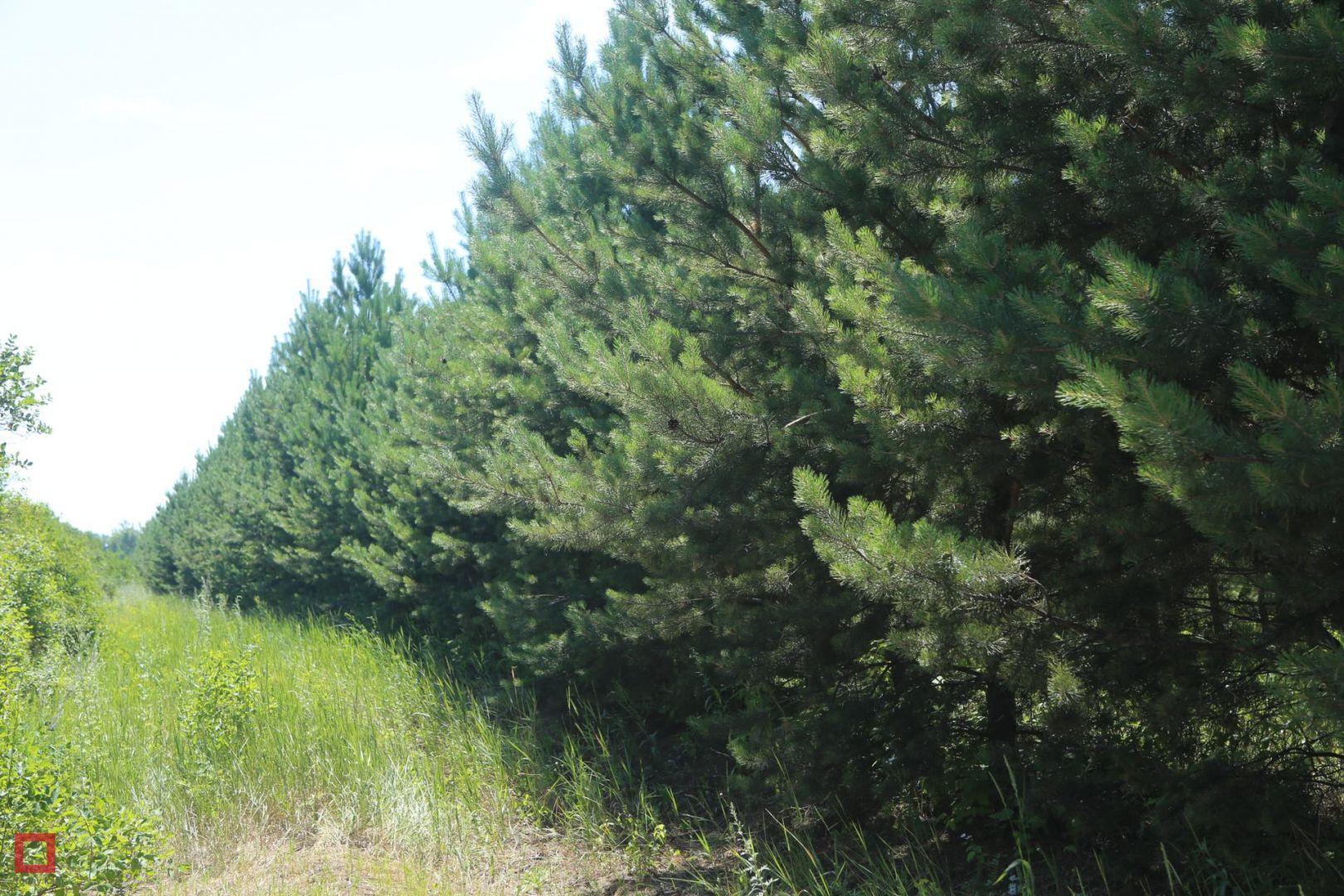 В Думе края обсудили создание лесопаркового зелёного пояса вокруг Ставрополя