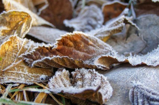В Ставропольском крае 30 сентября ожидаются заморозки