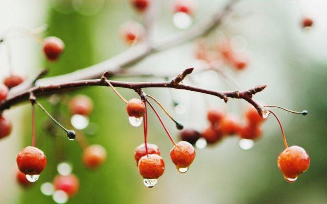 На Ставрополье ожидаются дожди и грозы