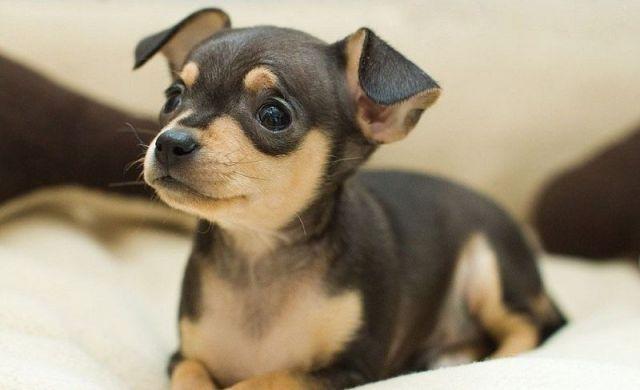 Жителя Ставрополья осудили за кражу собаки
