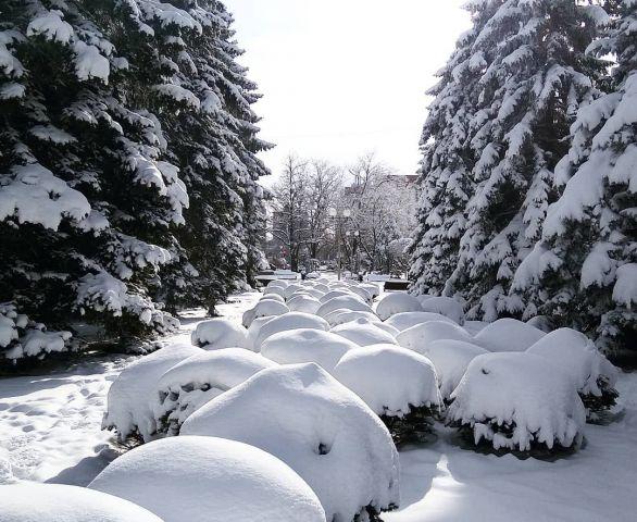 Фото недели: морозное Ставрополье